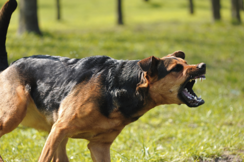 The Grim Reality of Fighting Dogs