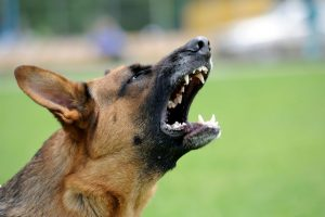 Virginia dog bite attorney