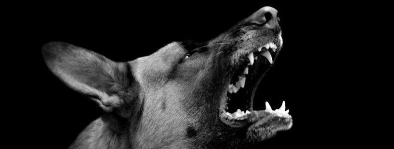 Virginia dog bite lawyer
