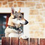 USPS Stickers Could Stem Dog Bite Trend